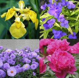 Многолетние цветы для клумбы названия