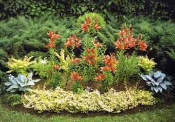 адовые цветы с мясистыми листьями 359 x 250 · jpeg