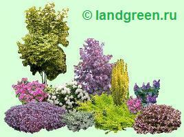 Декоративные растения в составе